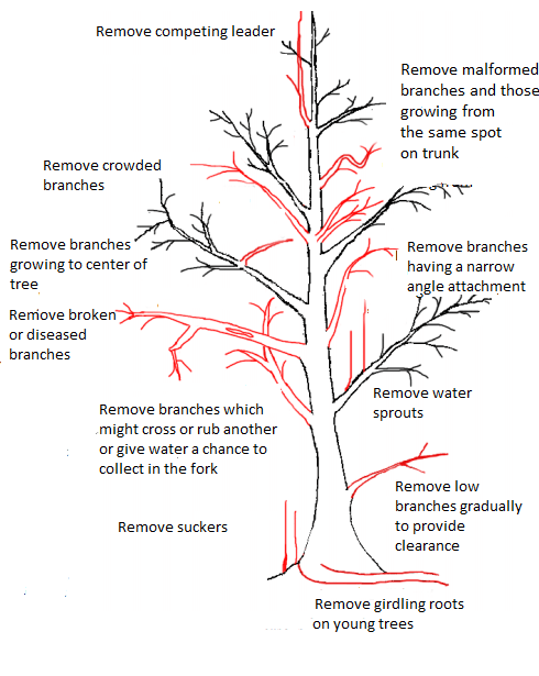 Tree Trimming And Pruning Tips