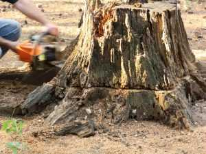 how to remove a stump with a chainsaw