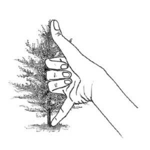 Measure the Height of a Tree using Folk Knowledge